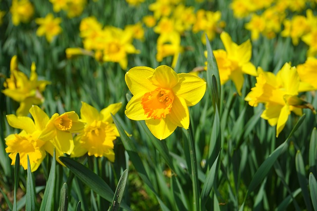 The National Cancer Registry and Daffodil Day 2015   National Cancer Registry Ireland
